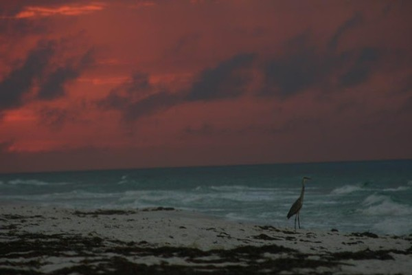 Thursday Sunrise Beach and Surf Report 04/05/12